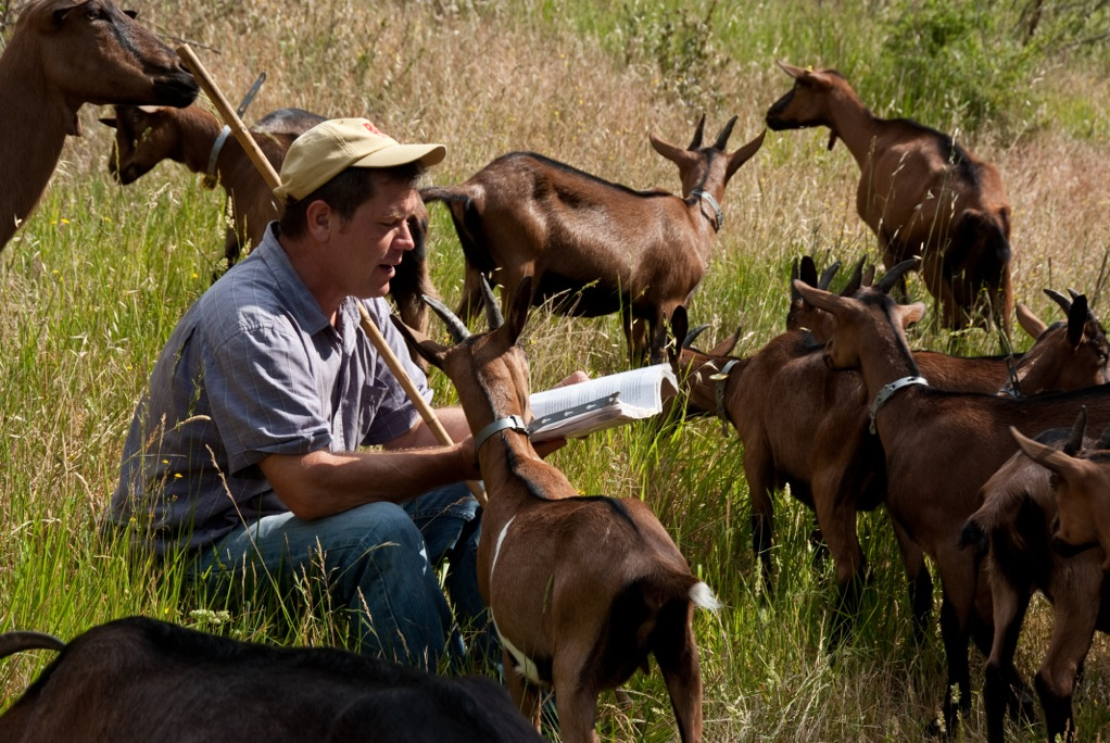 Ben reading to the goats